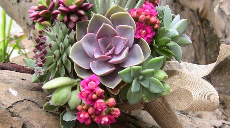 Plantas suculentas de diversos tipos