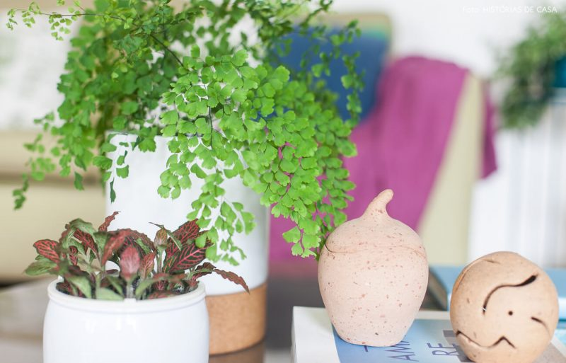 Avenca planta decorativa