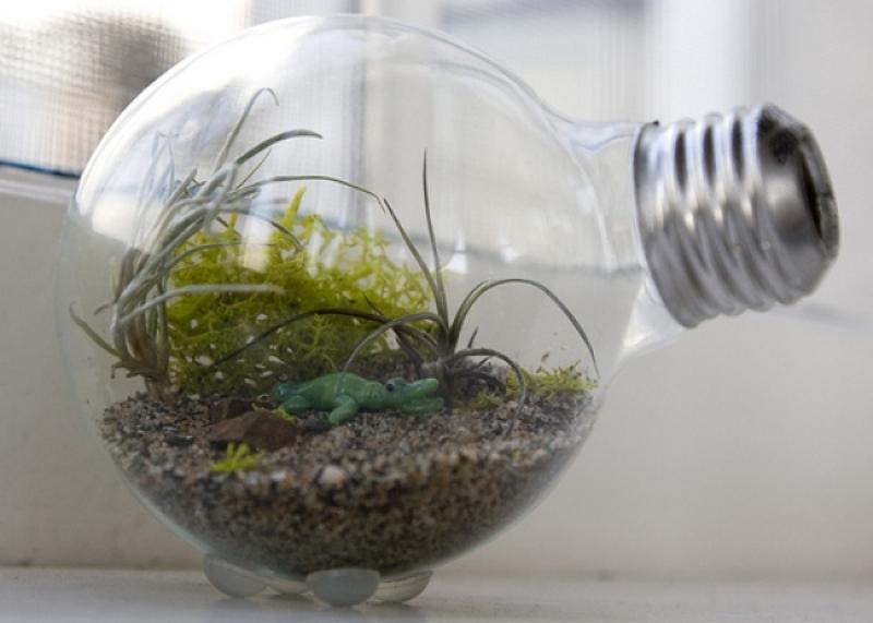 Ideia criativa de terrário montado em lâmpada