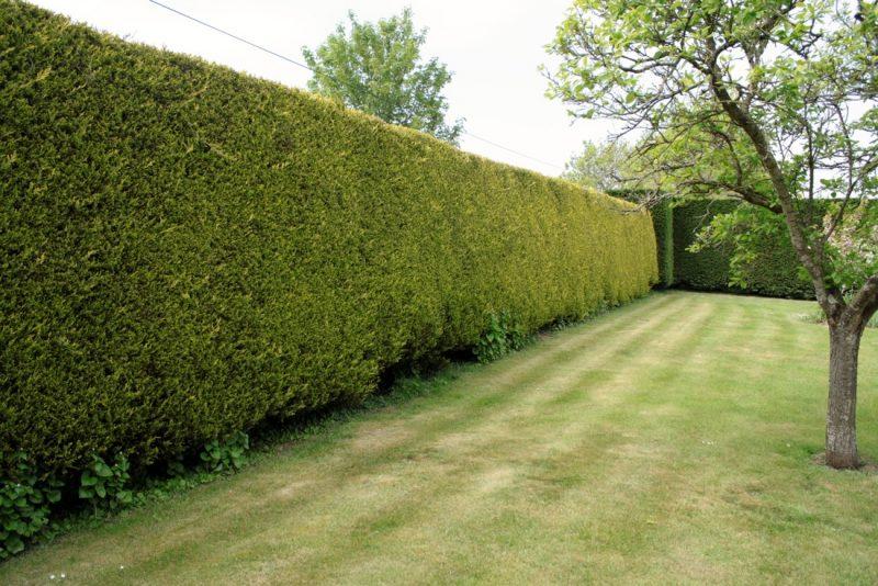 Cerca viva tipos plantas e pre o crescimento r pido for Foto di giardini per villette