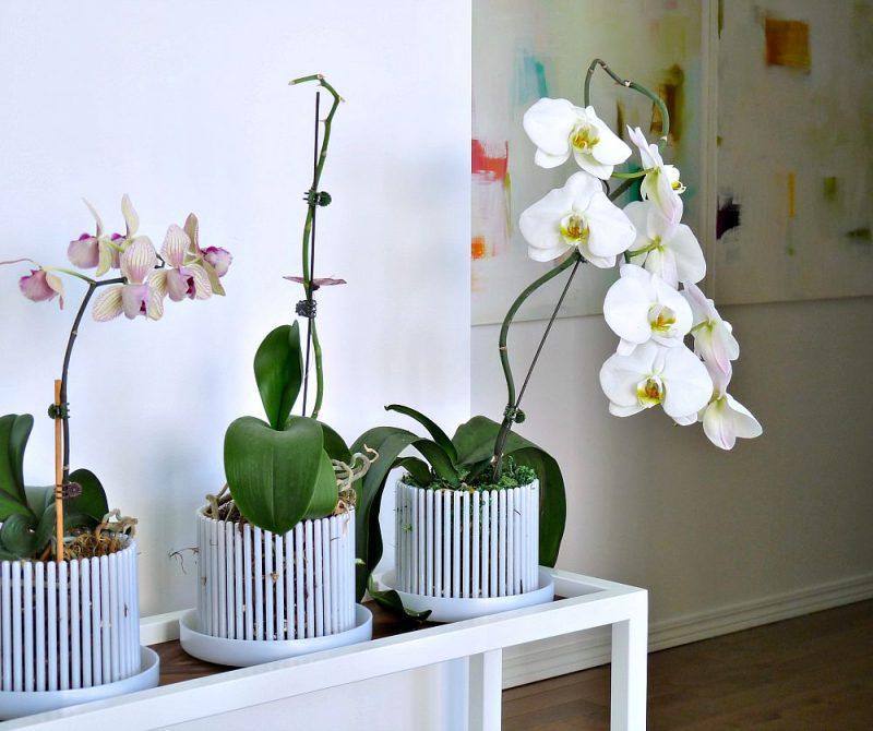 Arranjos de mesa mesa de jantar simples e barato for Vasi per orchidee ikea