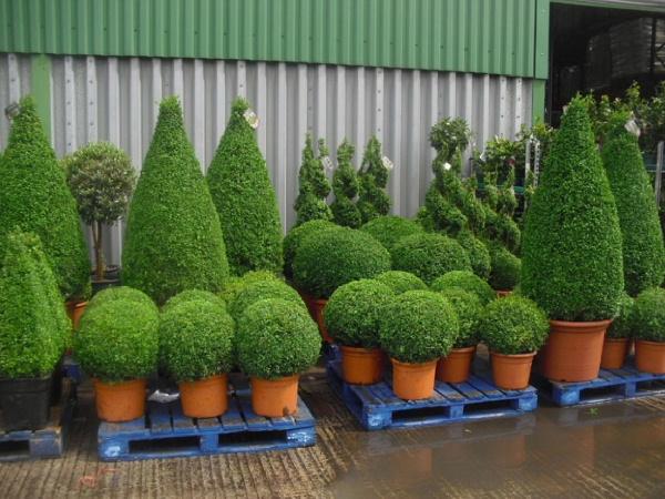 Topiárias com Plantas Naturais