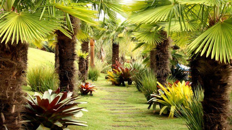 Tipos de palmeiras