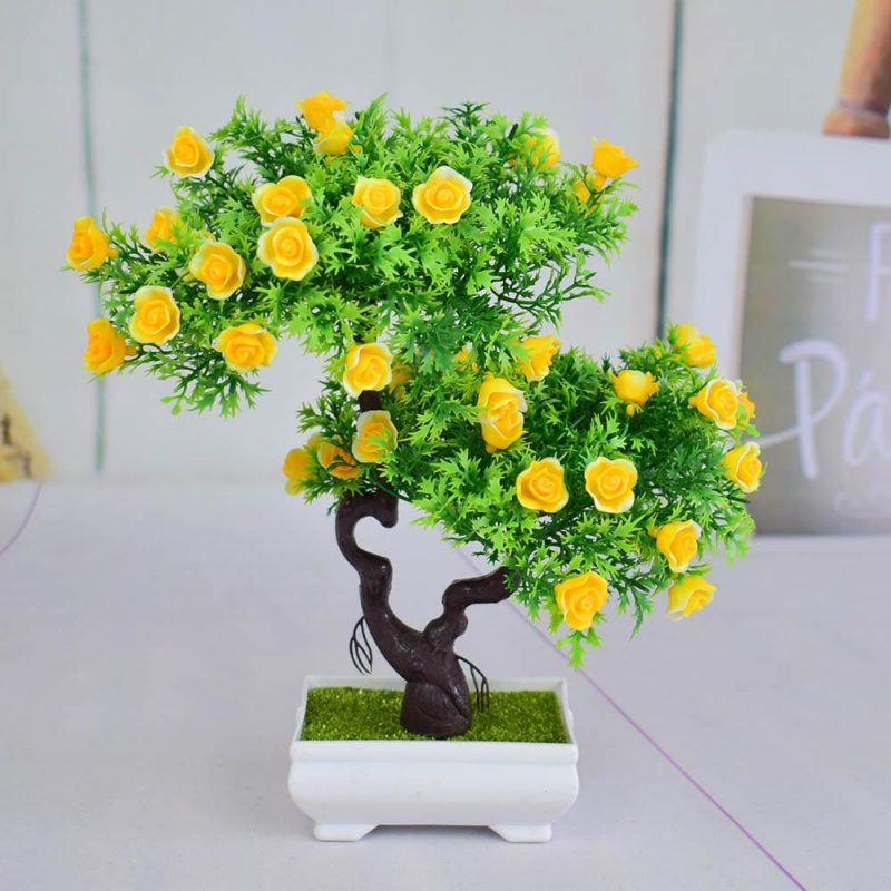 Mini Bonsai Para Interior