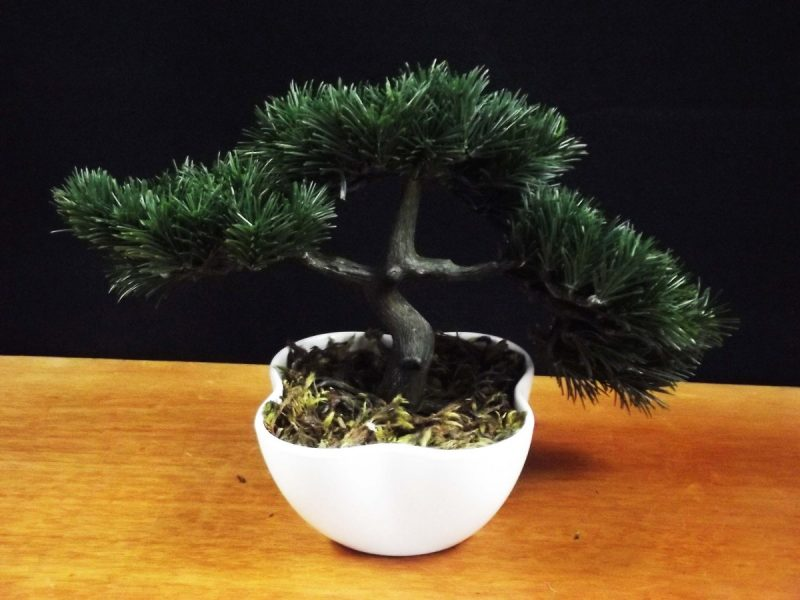 Mini Bonsai Para Interior