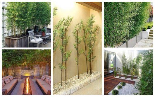 Bambu de Jardim