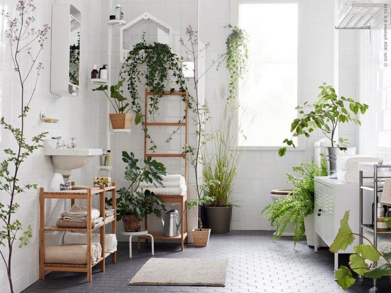 Folhagem Para Apartamento