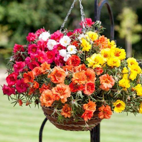 Tipos de Flores onze-horas
