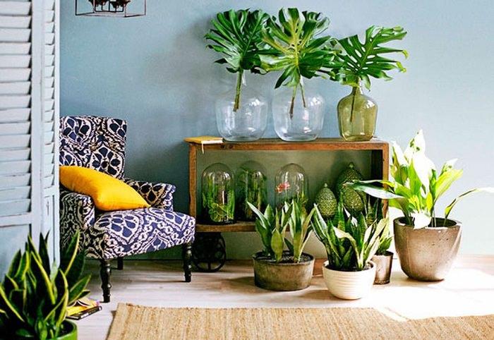 Plantas Para Apartamento Pequeno