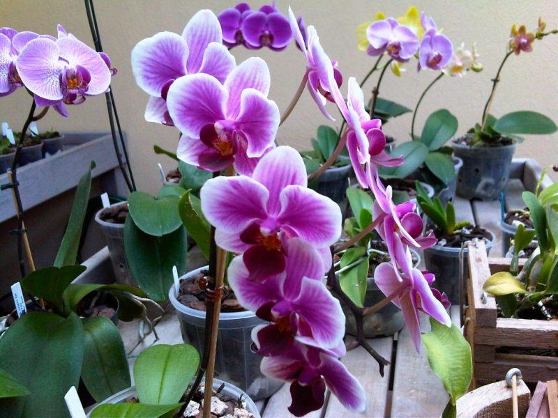 Adubo Caseiro Para Orquídeas