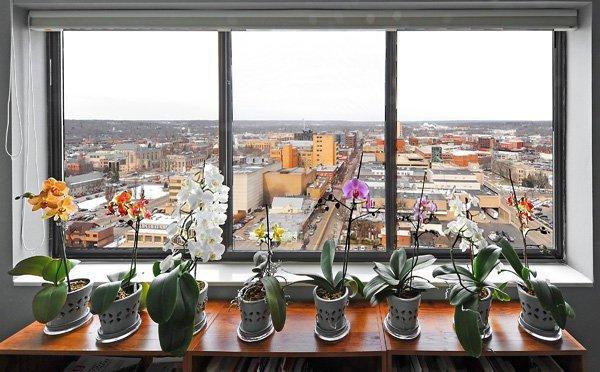 Orquídeas em Apartamento