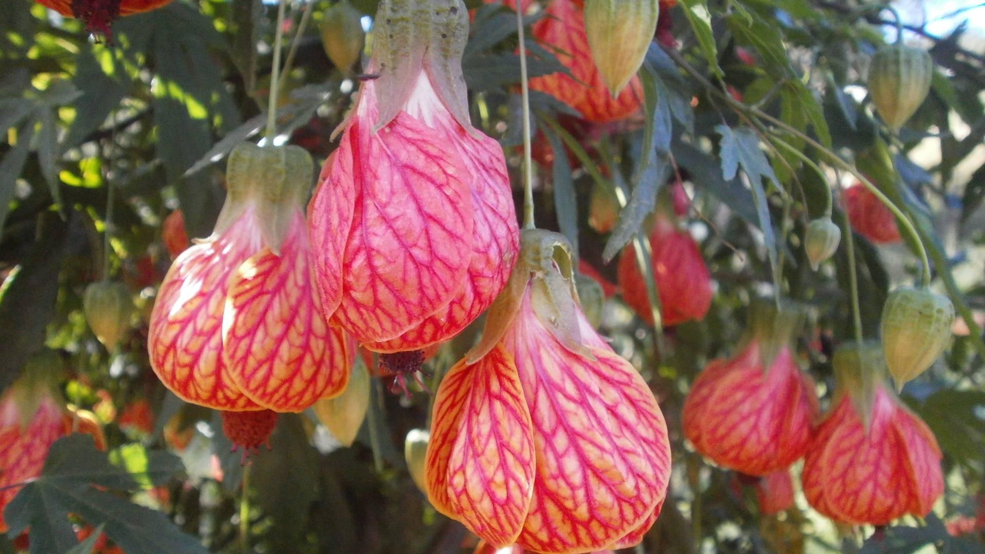 Flores de Inverno Para Jardim Externo