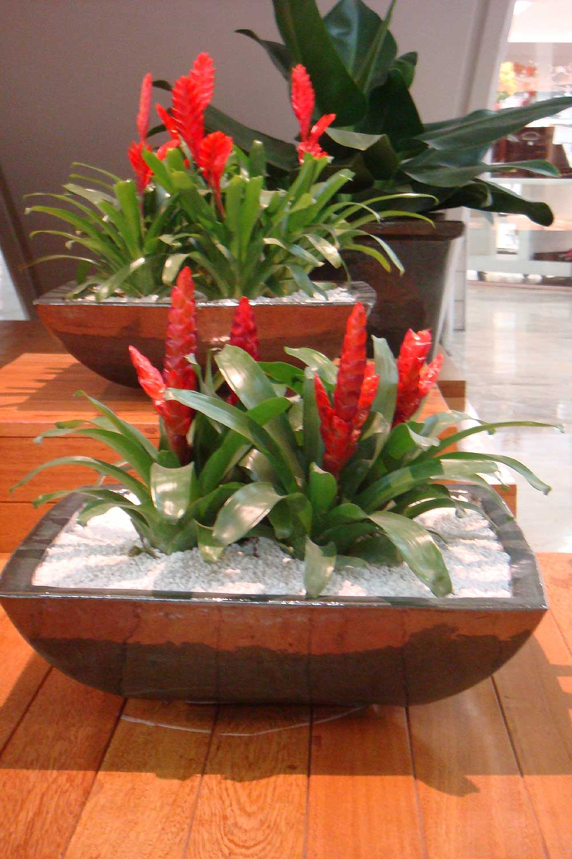 Flores de Inverno Para Jardim Interno
