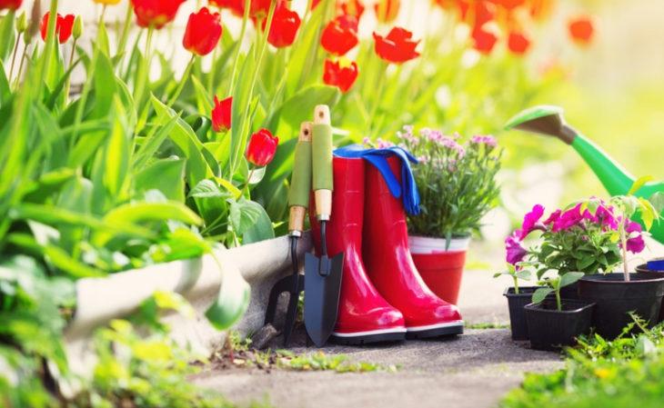 Como plantar tulipa