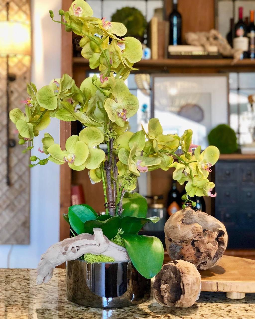 Orquídea Phalaenopsis verde