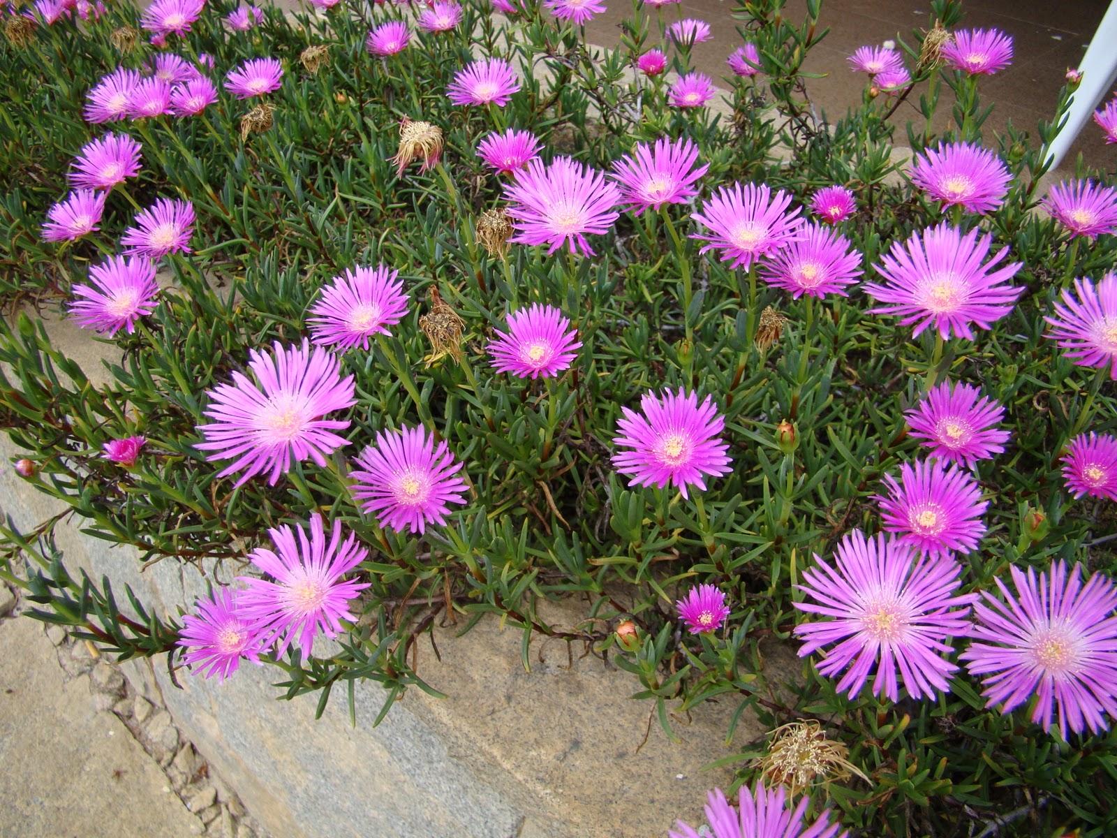 Flores Para Jardim Pequeno