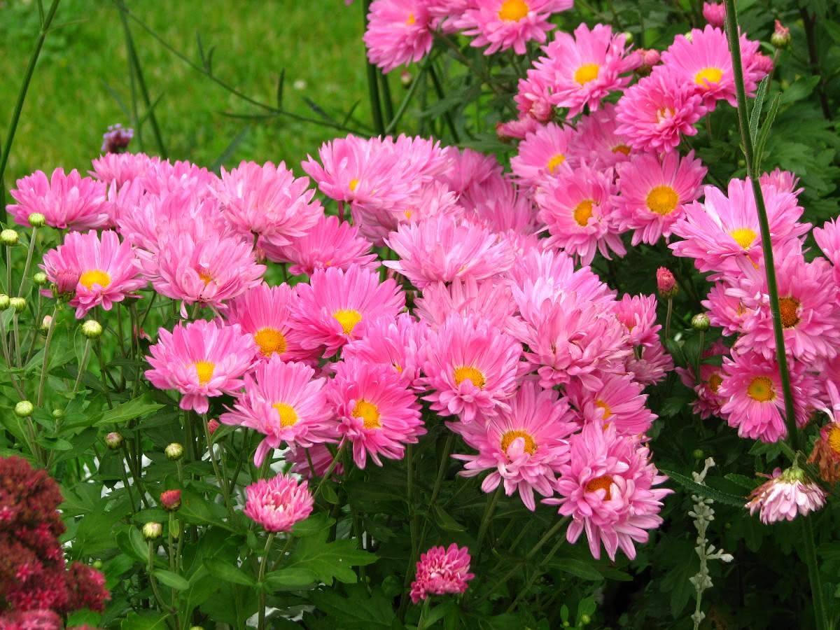 flores para jardim resistentes ao sol