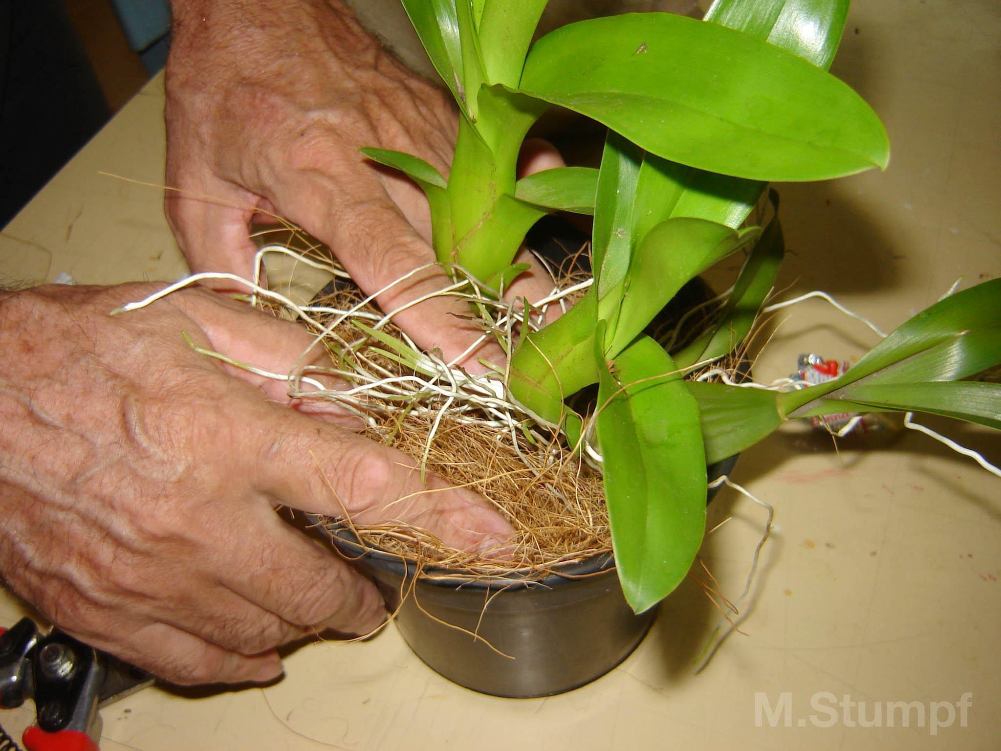 Como Plantar Orquídeas em Vasos