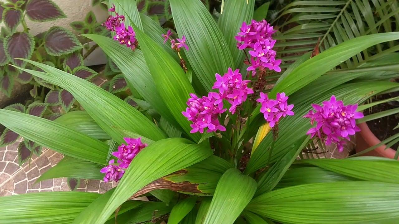 Como Plantar Orquídeas na Terra