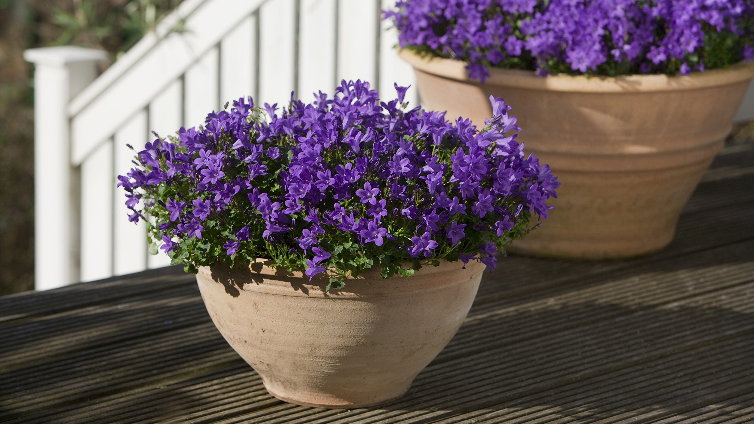 Como Cuidar de Violetas em Vasos