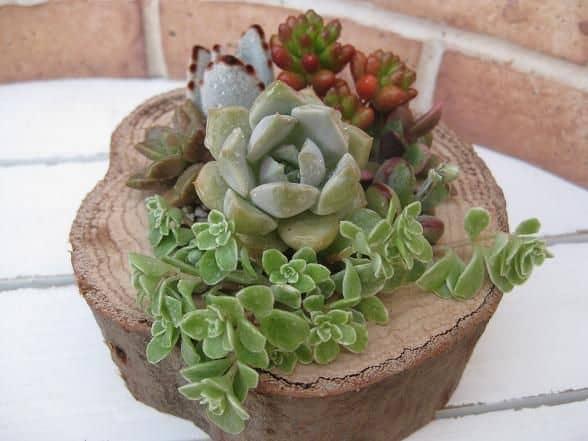 Mesa de Bolacha para plantas