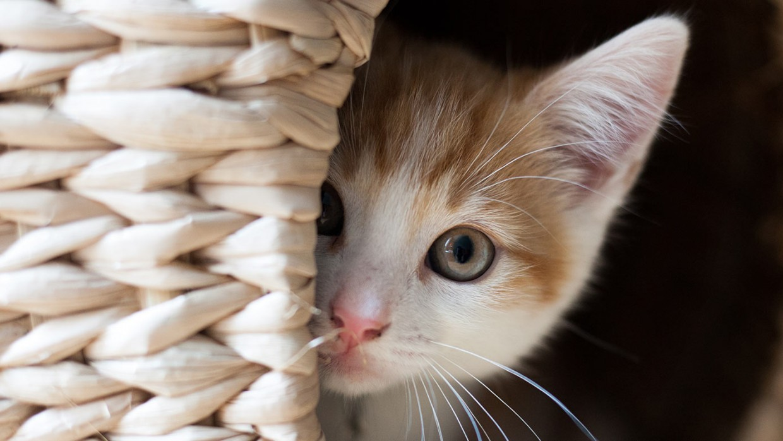 Nomes para Gato com Significado