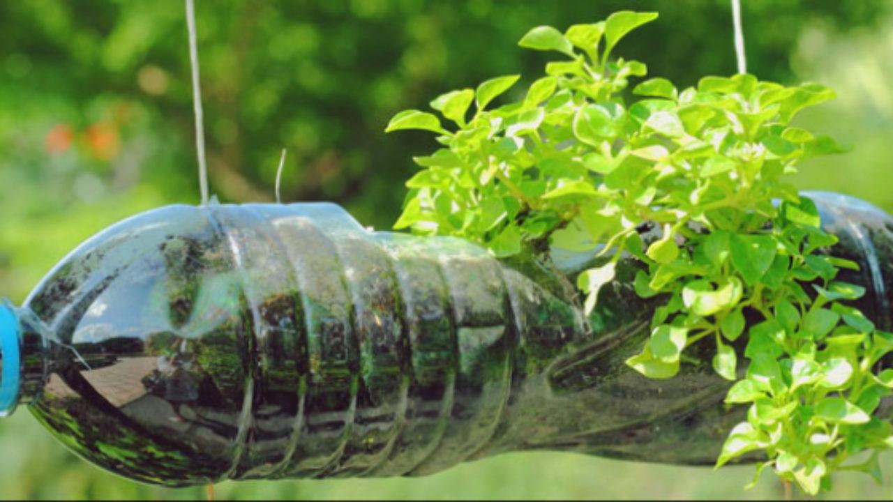 O Que Plantar Em Horta de Garrafa Pet