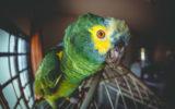 Viveiro de Papagaio